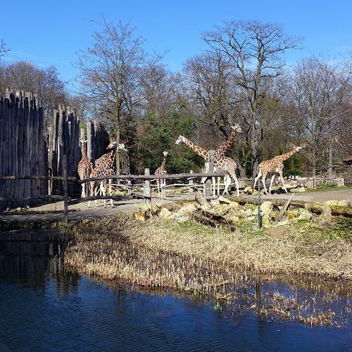 Leipzig, im Rosenthal, Zoo-Schaufenster-A, looking north, 15.04.2013