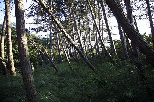 Insel Hiddensee, Waldeinsamkeit, 15.08.2012