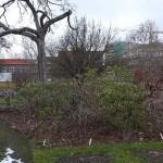 Leipzig, Botanischer Garten, Winter-Aussen-B, 07.02.2013