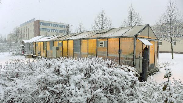 Leipzig, Phytotechnikum, Ans.v.Nord, 19.02.2013