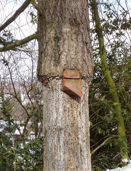WOFEX, Stein im Baum, art@privat, 26.03.2013